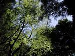 森林見上げ.JPG